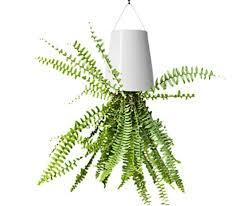White Hanging Planter by Modern Hanging Planter Plastic White Indoor Garden Hanging Flower