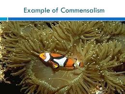 chapter 2 1 ecology organization of life individual population
