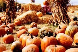 trendy pumpkin inspired fairy gardens teelie u0027s fairy garden