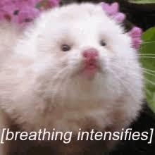 Fat Cat Heavy Breathing Meme - heavy breathing gifs tenor