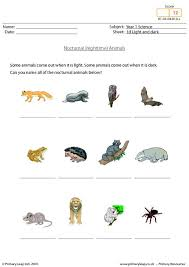 primaryleap co uk nocturnal animals worksheet
