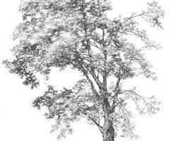 fairytale tree original drawing by katarzyna kmiecik