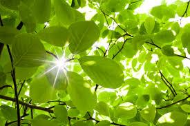 leaf classification kaggle