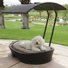 rattan chairs with sun protection dog bed pet products for them
