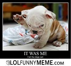 Who Me Meme - lol funny meme who let the dogs out