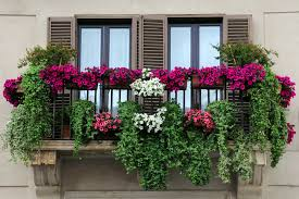 pictures flower balcony best image libraries