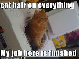 Everything Meme - cat hair on everything cat meme cat planet cat planet