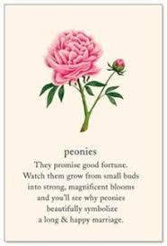 wedding flowers meaning peony the secret language of flowers