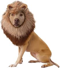 lion costume california costumes lion mane dog costume small chewy