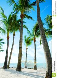 hammock amongst palm trees royalty free stock photos image 1561598