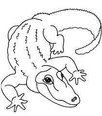 alligator clip art coloring pages virtren com