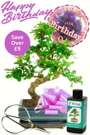 flowering bonsai birthday kit for her with free delivery u0026 care