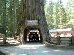 Chandelier Tree Address Redwoods Slow Family Online