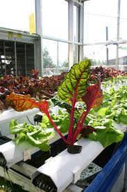 aquaponic farming growing in popularity with students