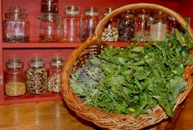 cuisiner les herbes sauvages le goût des plantes liste des plantes sauvages à cuisiner