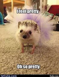 Hedgehog Meme - oh so pretty hedgehog meme generator captionator caption generator