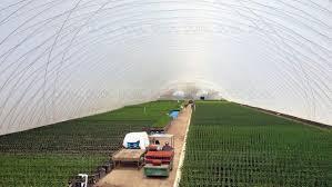 capannoni gonfiabili serra gonfiabile a tunnel monofalda di produzione temporanea