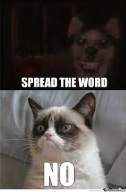 Smiling Cat Meme - smile dog vs grumpy cat grumpy cat know your meme