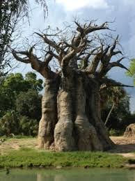 tree picture of disney s animal kingdom
