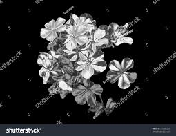 silver flowers silver small flowers many silver flowers stock illustration