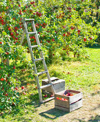 healthy sustainable living 5 reasons to grow fruit trees even
