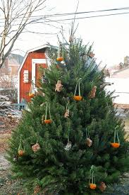 edible tree ornaments for birds crafts