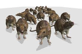 mice infestation in your home now what