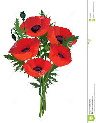 flower poppy bouquet royalty free stock images image 33026859