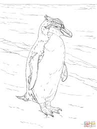 realistic royal penguin coloring page free printable coloring pages