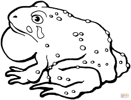 american toad 1 coloring page free printable coloring pages