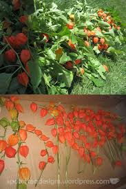Japanese Lantern Plant 95 Best 2 Chinese Lantern Plants Images On Pinterest Chinese