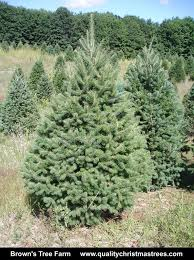 douglas fir christmas tree wholesale christmas trees