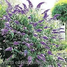 69 best attract butterflies u0026 hummingbirds images on pinterest