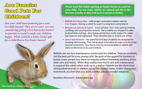 bunnies for easter easter rabbits small children are not a match
