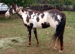 864 best genetics images on pinterest horses pretty horses and