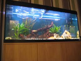 fluval roma 240 aquarium for sale at aquarist classifieds