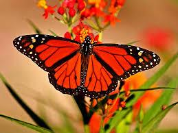 transformation from caterpillar to butterfly faithsmessenger com