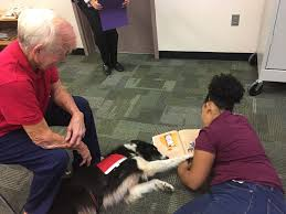 therapy dogs greater fort myers dog club