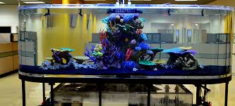 artificial decorations for aquariums news reef builders the reef