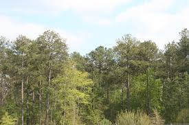 South Carolina forest images Southeastern mixed forests jpg