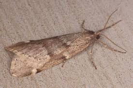 Tiny Moths In My Bathroom 28 Small Moths In Bedroom Mummy From The Help My Carpets Are