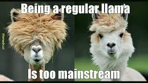 Llama Meme - hipster llamas meme by cade 828 memedroid