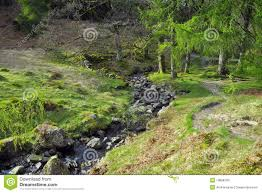river on forest glade in english countryside stock photo image