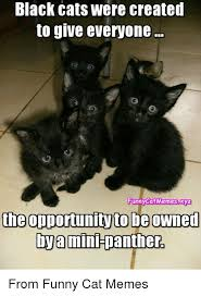 Funny Memes Cats - black cats were created to give everyone funny cat memesxyz the