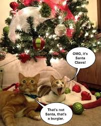 Funny Christmas Cat Memes - animals and christmas funny animal meme collection 14 pictures