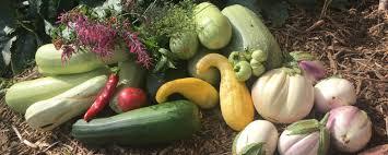 Winter Garden Produce Seec Celebrating New Garden With Ribbon Cutting Oct 4 Cu
