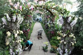 Botanical Garden Orchid Show Pin By Clark Rummery On Orchid Display Pinterest 25