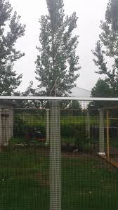 is this a decent pheasant aviary backyard chickens