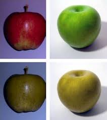 Color Blind What Do They See Color Blindness Simple English Wikipedia The Free Encyclopedia