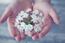white flower free images blossom plant petal finger pink flora